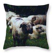 Blue Mountain Sheep Throw Pillow
