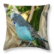 Blue Parakeet Throw Pillow by Renee Barnes