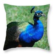 Blue Peafowl Throw Pillow