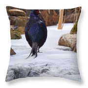 Blue Pheasant  Throw Pillow