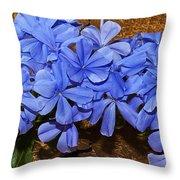 Blue Plumbago Throw Pillow