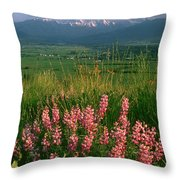 M-05925-blue Pod Lupine And Wallowa Mountain Throw Pillow