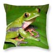 Blue-sided Tree Frog Throw Pillow