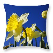 Blue Sky Spring Bright Daffodils Flowers Throw Pillow