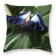 Blue-spotted Charaxes Butterfly #2 Throw Pillow