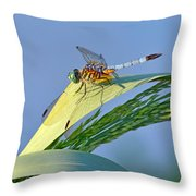 Blue Tail Dragonfly On Navarre Beach Throw Pillow