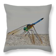 Blue Tail Dragonfly On Navarre Beach2 Throw Pillow