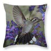 Blue-throated Hummingbird Throw Pillow