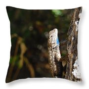 Blue Throated Lizard 2 Throw Pillow