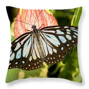 Blue Tiger Butterfly Throw Pillow