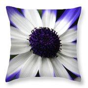 Blue Tipped Osteospermum Throw Pillow