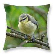 Blue Tit In A Cherry Tree Throw Pillow