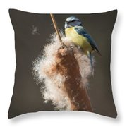 Blue Tit Throw Pillow