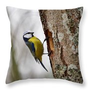 Blue Tit Searching Home Throw Pillow
