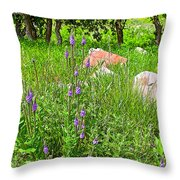 Blue Vervain And Rocks In Pipestone National Monument-minnesota  Throw Pillow