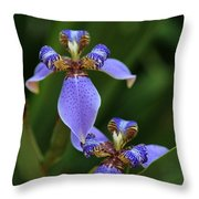 Blue Walking Iris Throw Pillow by Carol Groenen