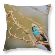 Blue Waxbill - Among The Thorns  Throw Pillow