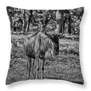 Blue Wildebeest-black And White Throw Pillow