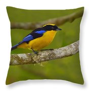 Blue-winged Mountain Tanager Throw Pillow