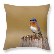 Bluebird At His Post Throw Pillow