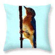 Bluebird Hangin Throw Pillow