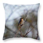 Bluebird In The Sun Throw Pillow