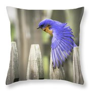 Bluebird On The Fence Throw Pillow