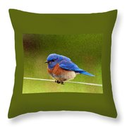 Bluebird  Painting Throw Pillow