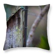 Bluebird With Nest Material In Beak Throw Pillow