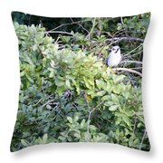 Bluejay Resting Throw Pillow