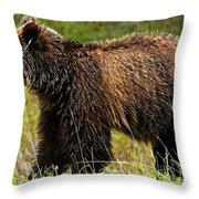 Bluetooth Grizzly 2 Throw Pillow