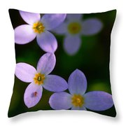 Bluets With Aphid Throw Pillow