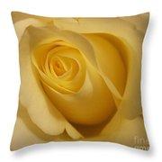 Blushing Cream Rose 3 Throw Pillow
