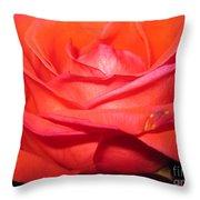 Blushing Orange Rose 7 Throw Pillow