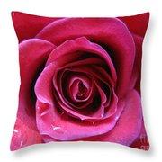 Blushing Pink Rose 3 Throw Pillow