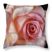 Blushing Pink Rose Throw Pillow