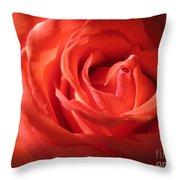 Blushing Orange Rose 1 Throw Pillow