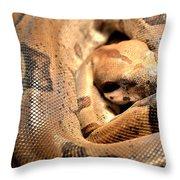 Boa Constrictor Throw Pillow