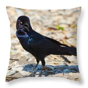 Boat-tailed Grackle Throw Pillow