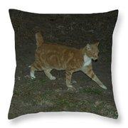 Bob-tail Cat Throw Pillow