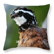 Bob White Quail Throw Pillow