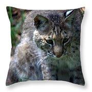 Bobcat 20 Throw Pillow