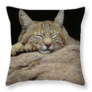 Bobcat, Arizona Throw Pillow