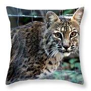 Bobcat Beauty Throw Pillow