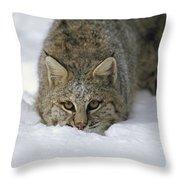 Bobcat Crouching In Snow Colorado Throw Pillow