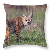Bobcat Glance Throw Pillow by Beth Sargent