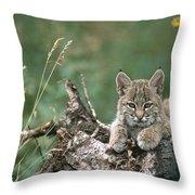 Bobcat Kitten Resting On A Log Idaho Throw Pillow