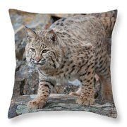 Bobcat On Rock Throw Pillow