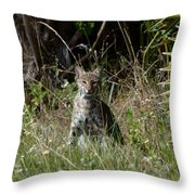 Bobcat On The Prowl Throw Pillow