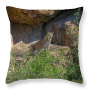 Bobcat Point Throw Pillow